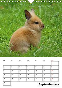 Kaninchen Terminplaner (Wandkalender 2019 DIN A4 hoch) - Produktdetailbild 9