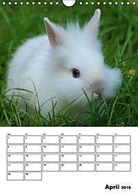 Kaninchen Terminplaner (Wandkalender 2019 DIN A4 hoch) - Produktdetailbild 4