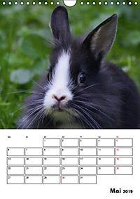 Kaninchen Terminplaner (Wandkalender 2019 DIN A4 hoch) - Produktdetailbild 5