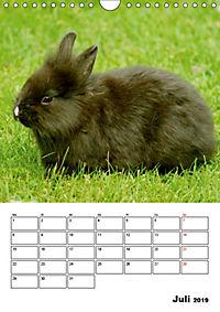Kaninchen Terminplaner (Wandkalender 2019 DIN A4 hoch) - Produktdetailbild 7
