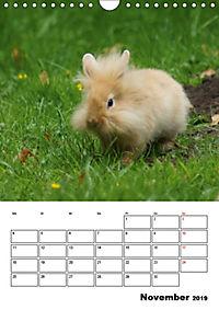 Kaninchen Terminplaner (Wandkalender 2019 DIN A4 hoch) - Produktdetailbild 11