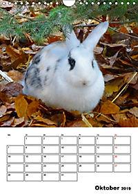 Kaninchen Terminplaner (Wandkalender 2019 DIN A4 hoch) - Produktdetailbild 10