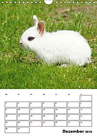 Kaninchen Terminplaner (Wandkalender 2019 DIN A4 hoch) - Produktdetailbild 12