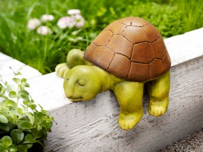 Kantenhocker Schildkröte Sleepy