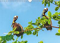 Karibik: Farbenfrohe Lebensfreude (Wandkalender 2019 DIN A4 quer) - Produktdetailbild 8