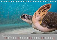Karibische Meeresschildkröten (Tischkalender 2019 DIN A5 quer) - Produktdetailbild 11