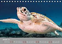 Karibische Meeresschildkröten (Tischkalender 2019 DIN A5 quer) - Produktdetailbild 1