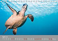 Karibische Meeresschildkröten (Tischkalender 2019 DIN A5 quer) - Produktdetailbild 4