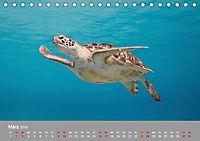 Karibische Meeresschildkröten (Tischkalender 2019 DIN A5 quer) - Produktdetailbild 3