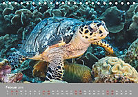 Karibische Meeresschildkröten (Tischkalender 2019 DIN A5 quer) - Produktdetailbild 2