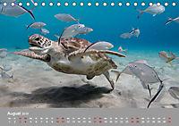 Karibische Meeresschildkröten (Tischkalender 2019 DIN A5 quer) - Produktdetailbild 8