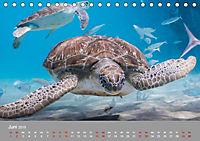 Karibische Meeresschildkröten (Tischkalender 2019 DIN A5 quer) - Produktdetailbild 6