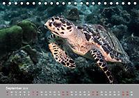 Karibische Meeresschildkröten (Tischkalender 2019 DIN A5 quer) - Produktdetailbild 9