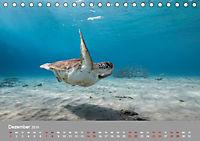 Karibische Meeresschildkröten (Tischkalender 2019 DIN A5 quer) - Produktdetailbild 12