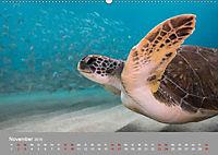Karibische Meeresschildkröten (Wandkalender 2019 DIN A2 quer) - Produktdetailbild 2