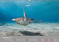 Karibische Meeresschildkröten (Wandkalender 2019 DIN A2 quer) - Produktdetailbild 5
