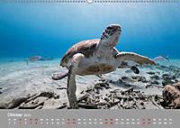 Karibische Meeresschildkröten (Wandkalender 2019 DIN A2 quer) - Produktdetailbild 4