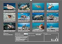 Karibische Meeresschildkröten (Wandkalender 2019 DIN A2 quer) - Produktdetailbild 8