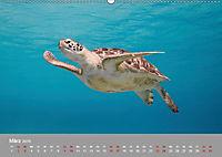 Karibische Meeresschildkröten (Wandkalender 2019 DIN A2 quer) - Produktdetailbild 9