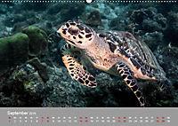 Karibische Meeresschildkröten (Wandkalender 2019 DIN A2 quer) - Produktdetailbild 7