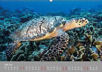 Karibische Meeresschildkröten (Wandkalender 2019 DIN A2 quer) - Produktdetailbild 10