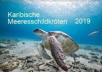 Karibische Meeresschildkröten (Wandkalender 2019 DIN A2 quer), Yvonne Kühnast