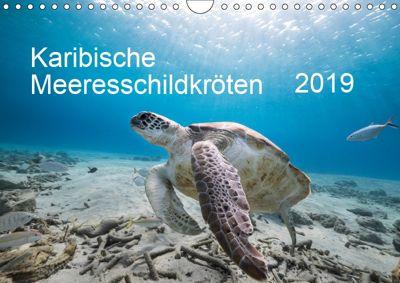 Karibische Meeresschildkröten (Wandkalender 2019 DIN A4 quer), Yvonne Kühnast
