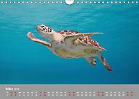 Karibische Meeresschildkröten (Wandkalender 2019 DIN A4 quer) - Produktdetailbild 3