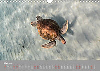 Karibische Meeresschildkröten (Wandkalender 2019 DIN A4 quer) - Produktdetailbild 5