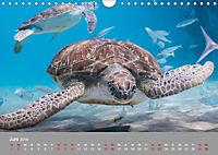 Karibische Meeresschildkröten (Wandkalender 2019 DIN A4 quer) - Produktdetailbild 6