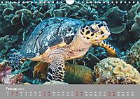 Karibische Meeresschildkröten (Wandkalender 2019 DIN A4 quer) - Produktdetailbild 2