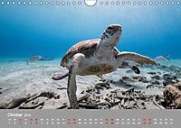 Karibische Meeresschildkröten (Wandkalender 2019 DIN A4 quer) - Produktdetailbild 10