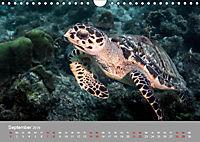 Karibische Meeresschildkröten (Wandkalender 2019 DIN A4 quer) - Produktdetailbild 9