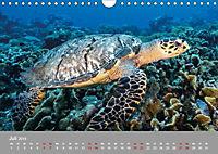 Karibische Meeresschildkröten (Wandkalender 2019 DIN A4 quer) - Produktdetailbild 7