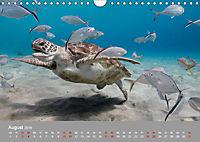 Karibische Meeresschildkröten (Wandkalender 2019 DIN A4 quer) - Produktdetailbild 8
