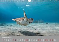 Karibische Meeresschildkröten (Wandkalender 2019 DIN A4 quer) - Produktdetailbild 12