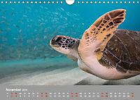 Karibische Meeresschildkröten (Wandkalender 2019 DIN A4 quer) - Produktdetailbild 11