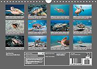 Karibische Meeresschildkröten (Wandkalender 2019 DIN A4 quer) - Produktdetailbild 13