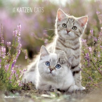 katzen 2016 cats kalender g nstig bei bestellen. Black Bedroom Furniture Sets. Home Design Ideas