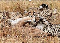 Katzen Afrikas (Wandkalender 2019 DIN A3 quer) - Produktdetailbild 3