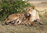 Katzen Afrikas (Wandkalender 2019 DIN A3 quer) - Produktdetailbild 2