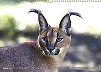 Katzen Afrikas (Wandkalender 2019 DIN A3 quer) - Produktdetailbild 1