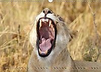 Katzen Afrikas (Wandkalender 2019 DIN A3 quer) - Produktdetailbild 7