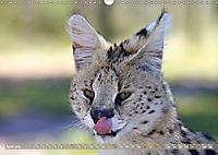 Katzen Afrikas (Wandkalender 2019 DIN A3 quer) - Produktdetailbild 4