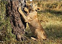 Katzen Afrikas (Wandkalender 2019 DIN A3 quer) - Produktdetailbild 5