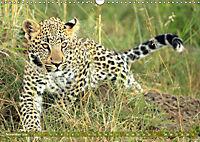 Katzen Afrikas (Wandkalender 2019 DIN A3 quer) - Produktdetailbild 11