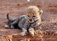 Katzen Afrikas (Wandkalender 2019 DIN A3 quer) - Produktdetailbild 8