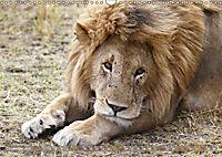 Katzen Afrikas (Wandkalender 2019 DIN A3 quer) - Produktdetailbild 12