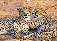 Katzen Afrikas (Wandkalender 2019 DIN A3 quer) - Produktdetailbild 9