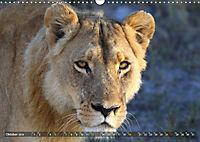 Katzen Afrikas (Wandkalender 2019 DIN A3 quer) - Produktdetailbild 10